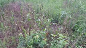Kleingarten(wohn)hausgrundstück wartet auf neue Eigentümer